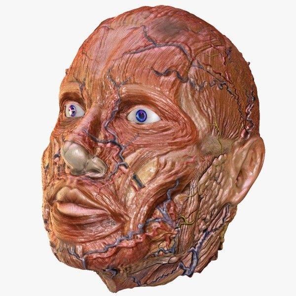 Картинка лицо без кожи
