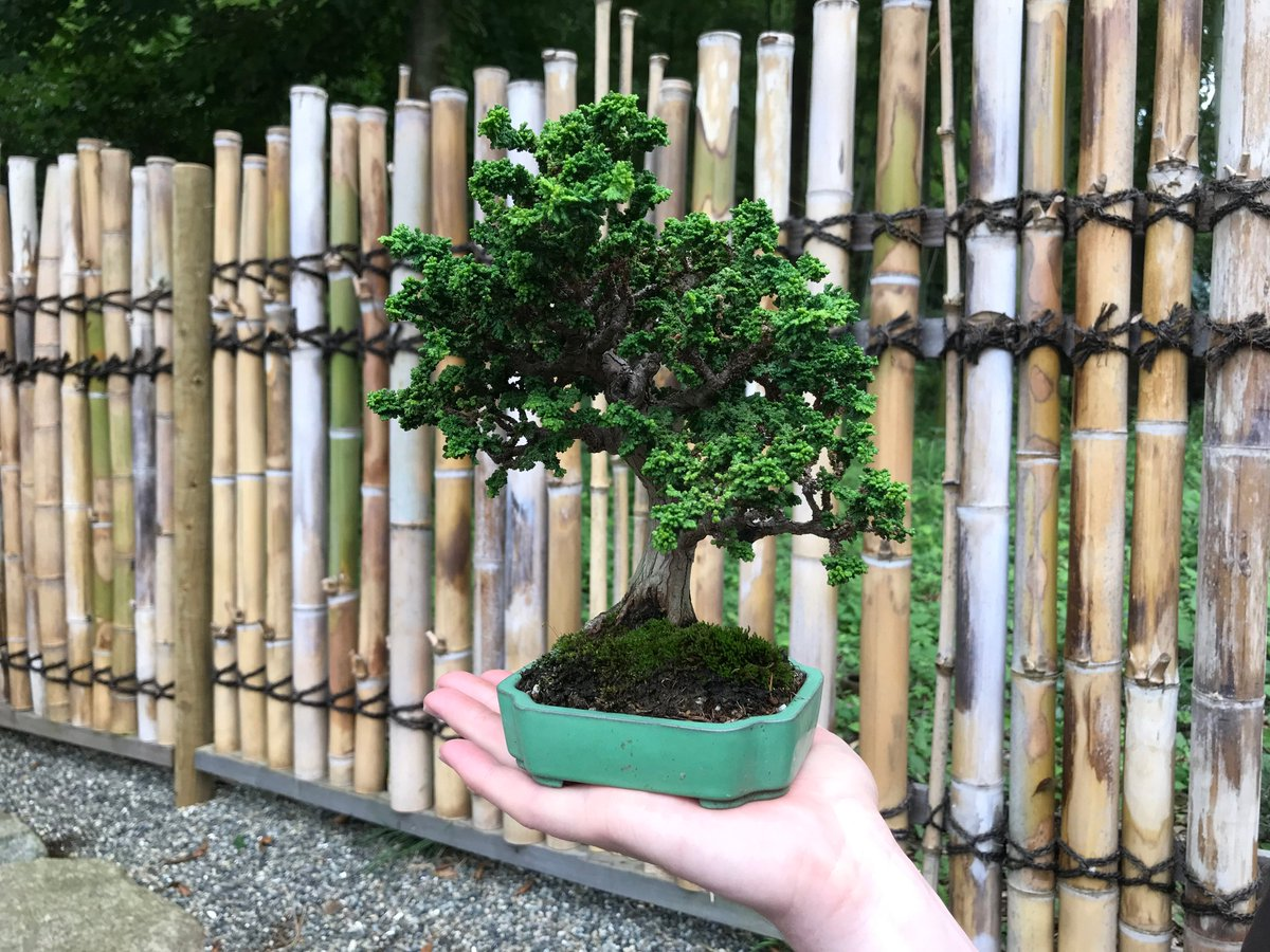 Mofa Of Japan On Twitter Japanbrandprogram Bonsai Expert Mr Adam Jones Visited Washington D C Memphis Nashville Cleveland And Columbus In Usa Through His Presentations And Workshops He Shared Expertise In The