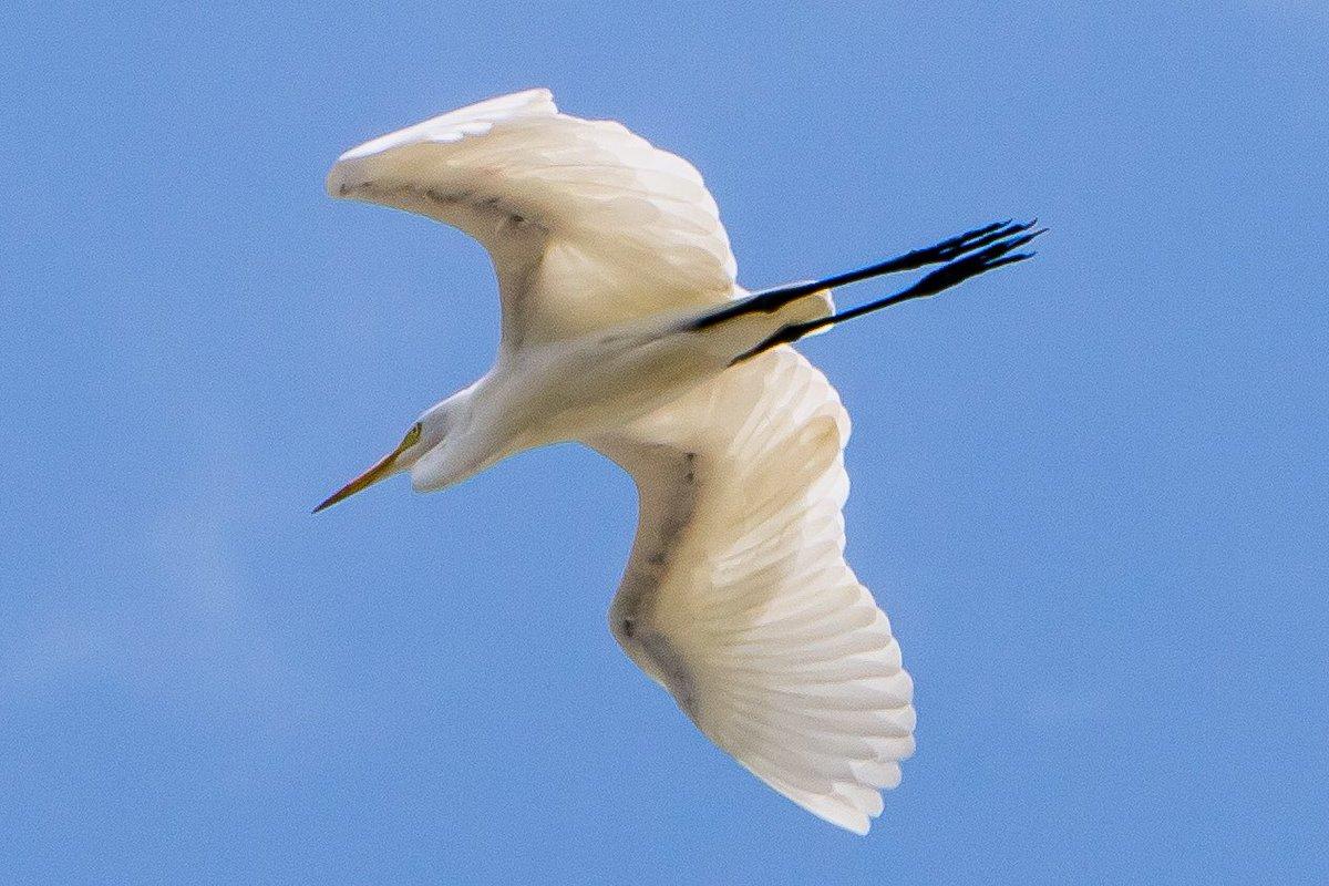 The Best Burung Terbang