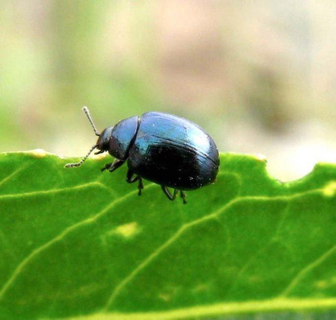 какие есть жучки жуки картинка жизнь так проживём