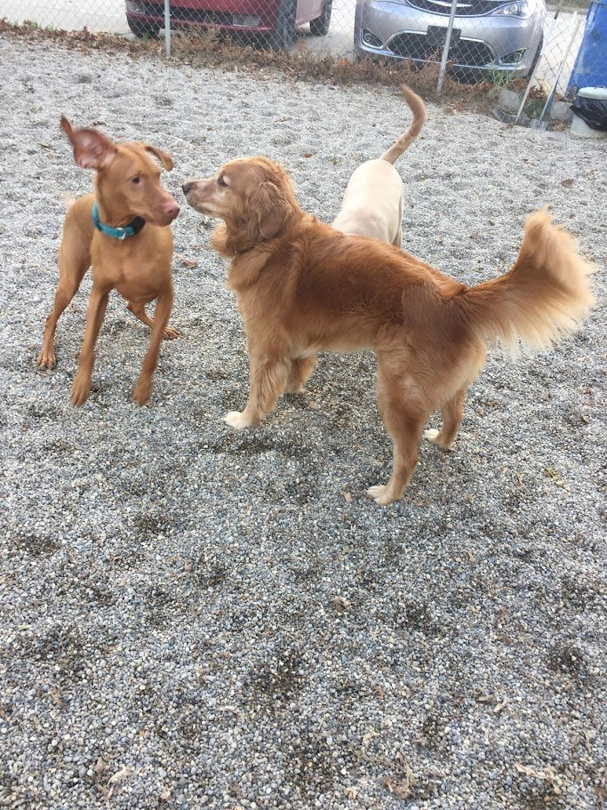 Copper and Rosie love spending time together!