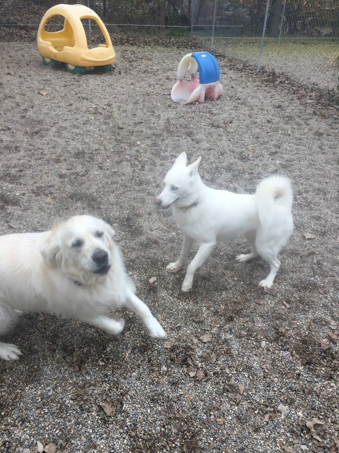 Ace and Sesi love running around together!