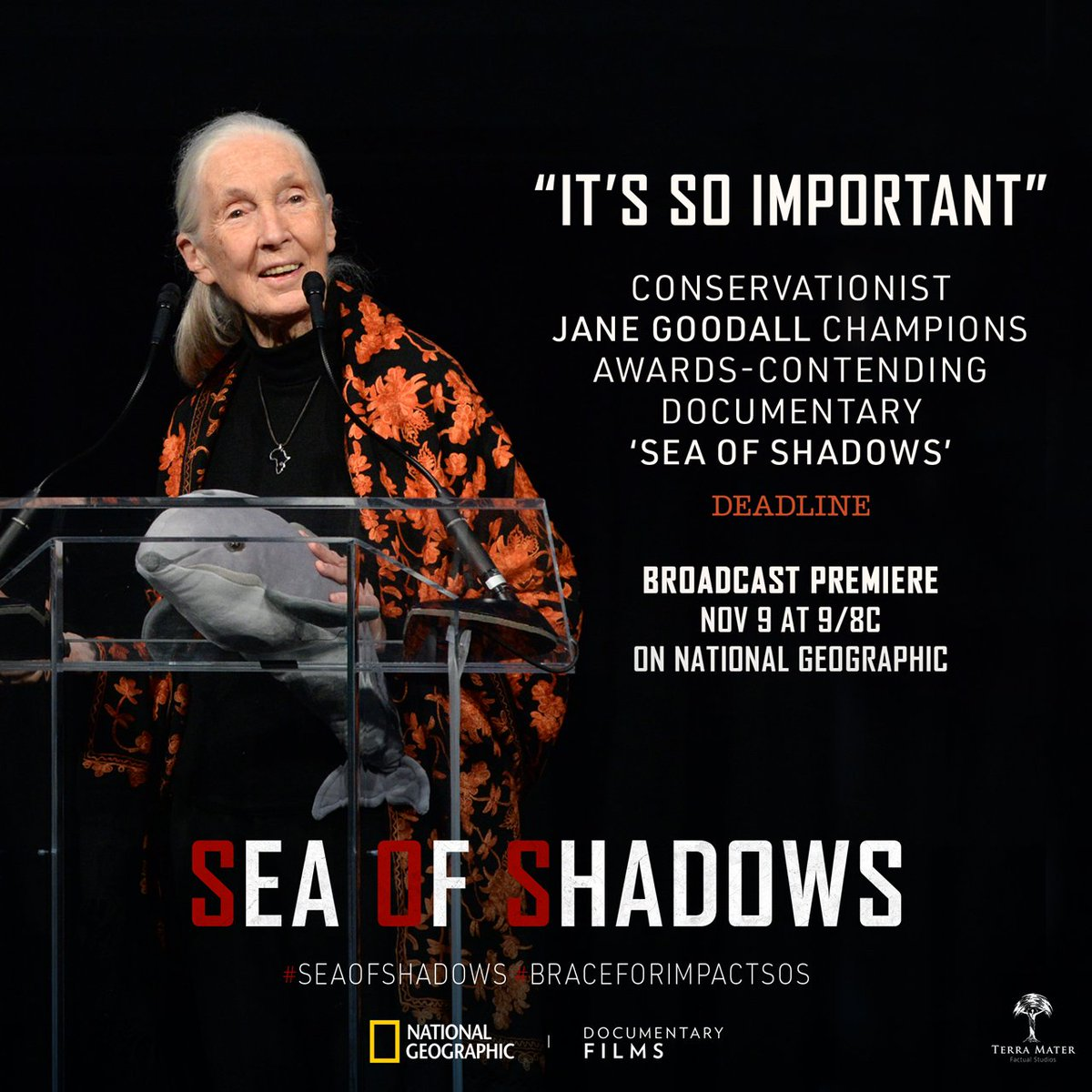 "With fewer than a dozen vaquita left in existence, we echo @JaneGoodallInst's sentiment: ""Are we going to let this very unique, very beautiful little creature just go or are we going to fight for it?"" #SeaOfShadows <br>http://pic.twitter.com/RKgLtksW7Y"