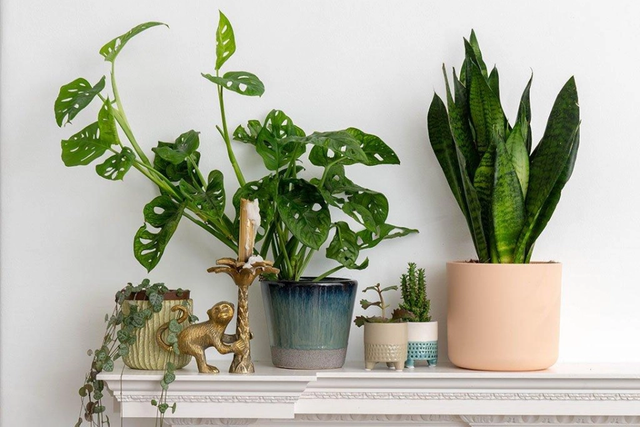 Potted plants do not improve indoor air quality, according to a new study. This has been a common misconception for some time. Plants are great, but they don't clean indoor air quick enough to have an effect on the air quality of your home or office.
