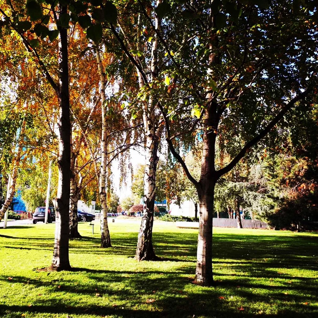 Uživajte u sunčanom novembru & iskoristite prelepo #dvoriste i #park  ovde @NBGPProperties https://t.co/BtenV7oFCR