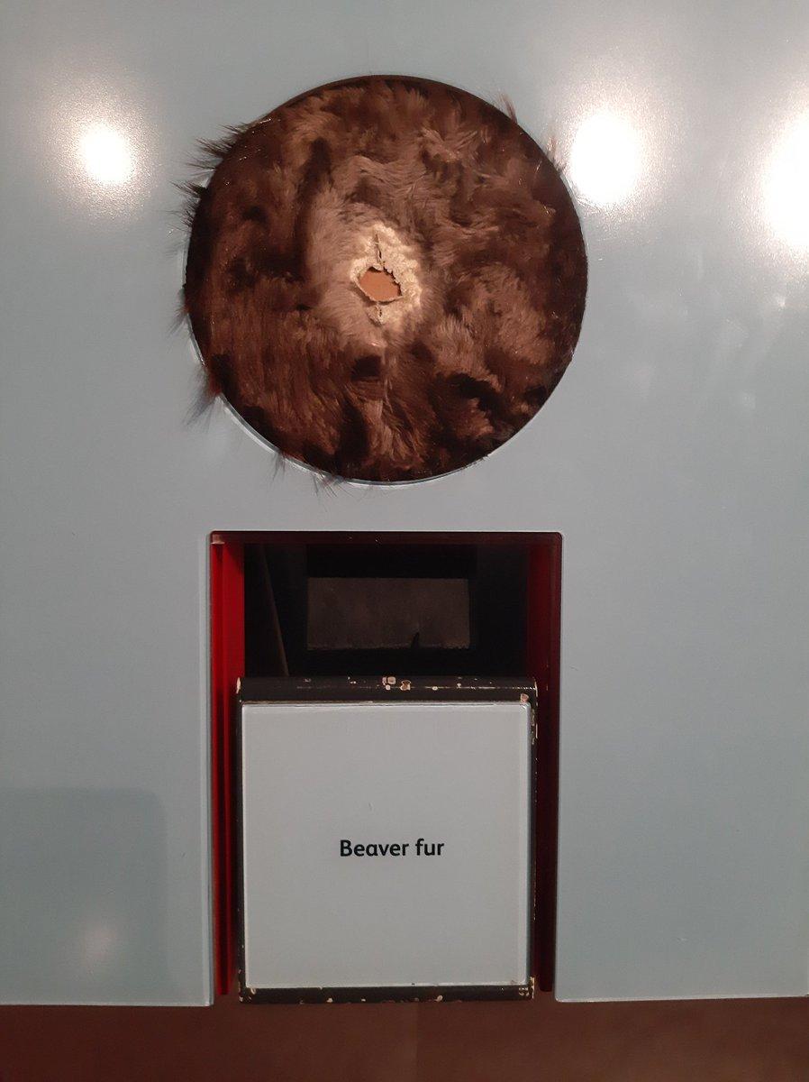 beaverfur hashtag on Twitter