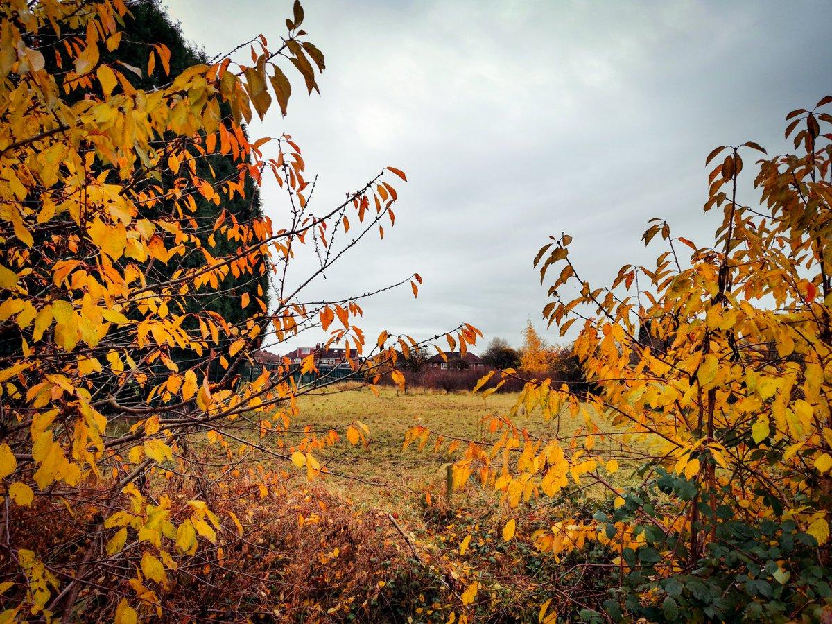 Autumn in Denton west
