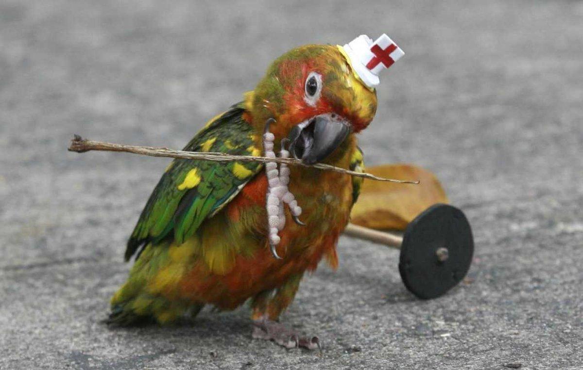 прикольные попугаи фото такого