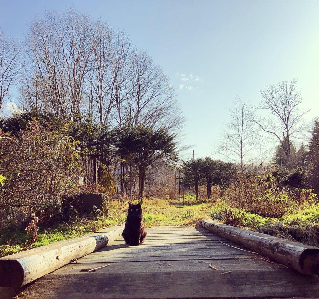 少し気温が上がった日。母屋前の小川にかかる橋は猫たちお気に入りの日向ぼっこ場所。