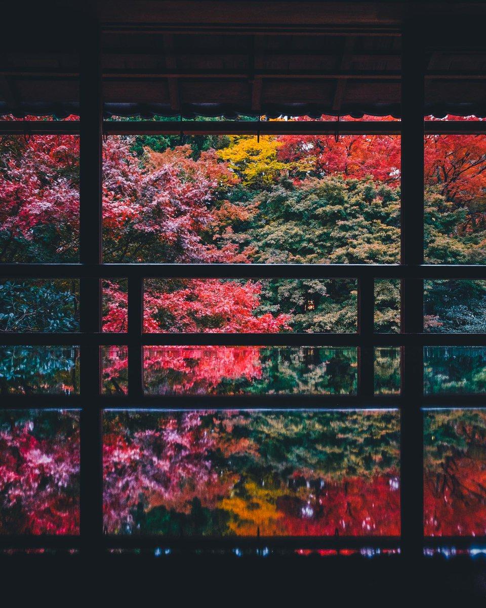 滋賀県の紅葉です。知る人ぞ知る、旧竹林院庭園。