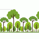 Image for the Tweet beginning: Forests don't have to be