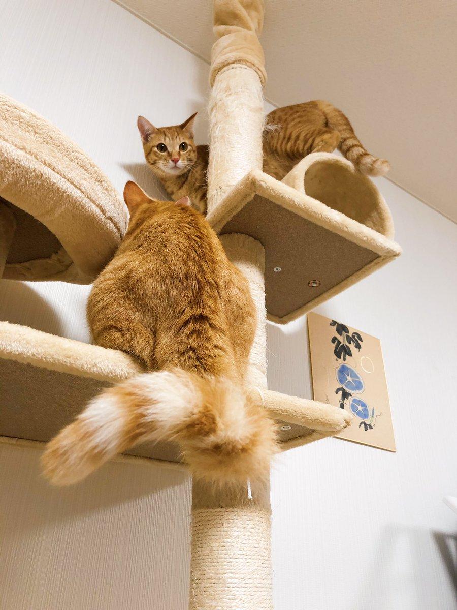 尻尾っていいよね #チャーミーとミーコ #猫の尻尾 #ねこがいる生活