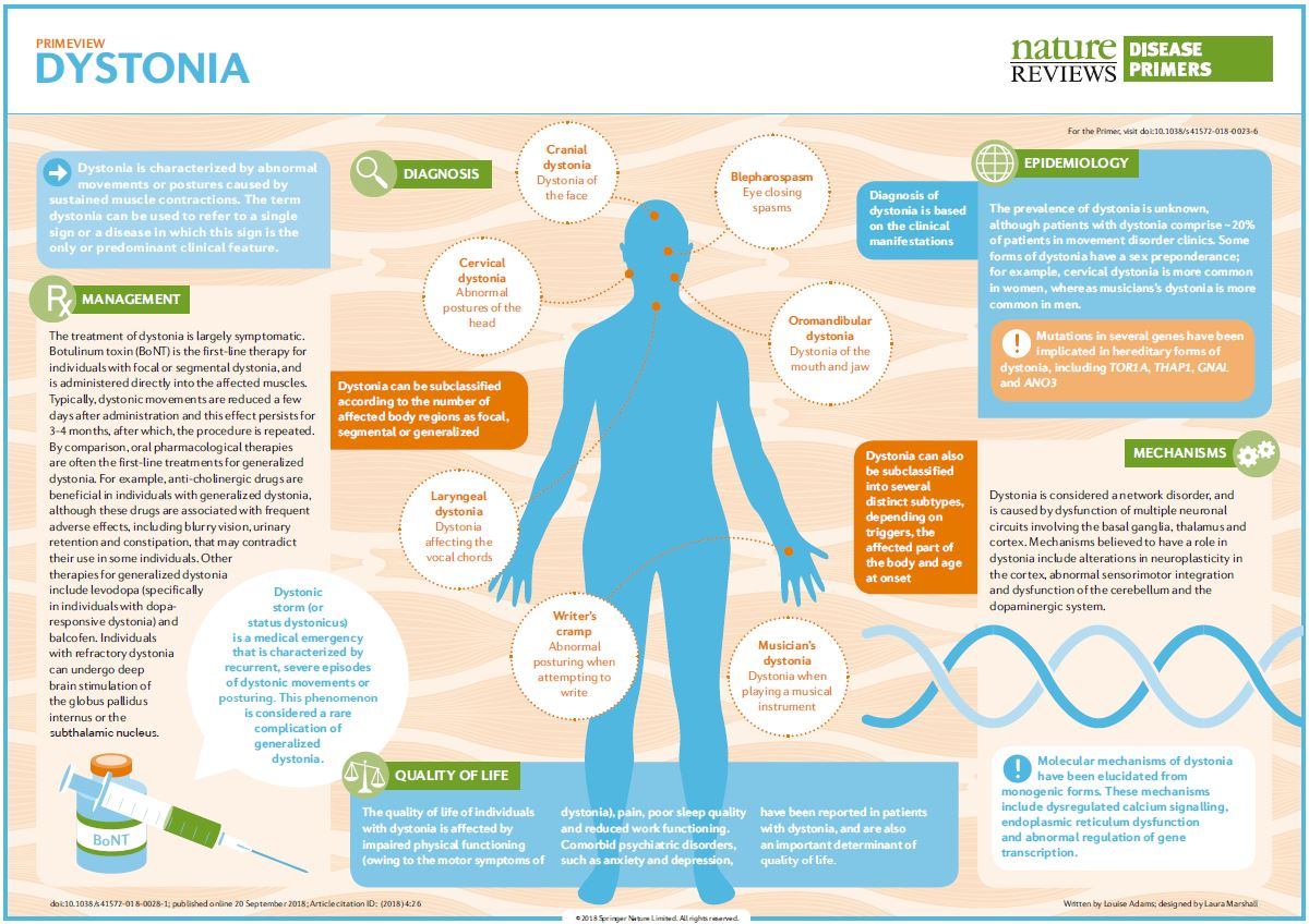 """Nature Reviews Disease Primers on Twitter: """"#Dystonia is characterized by  abnormal movements or postures caused by sustained muscle contractions  https://t.co/coawRC8Iag… https://t.co/CUrbUOdkDu"""""""