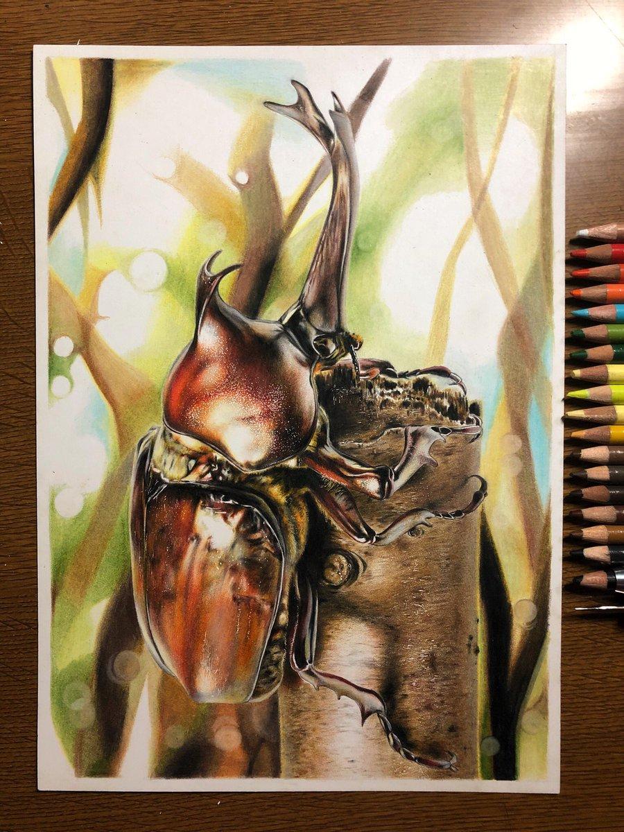 色鉛筆でカブトムシを描きました!沢山の方々に見て貰えたら嬉しいです(´∀`)