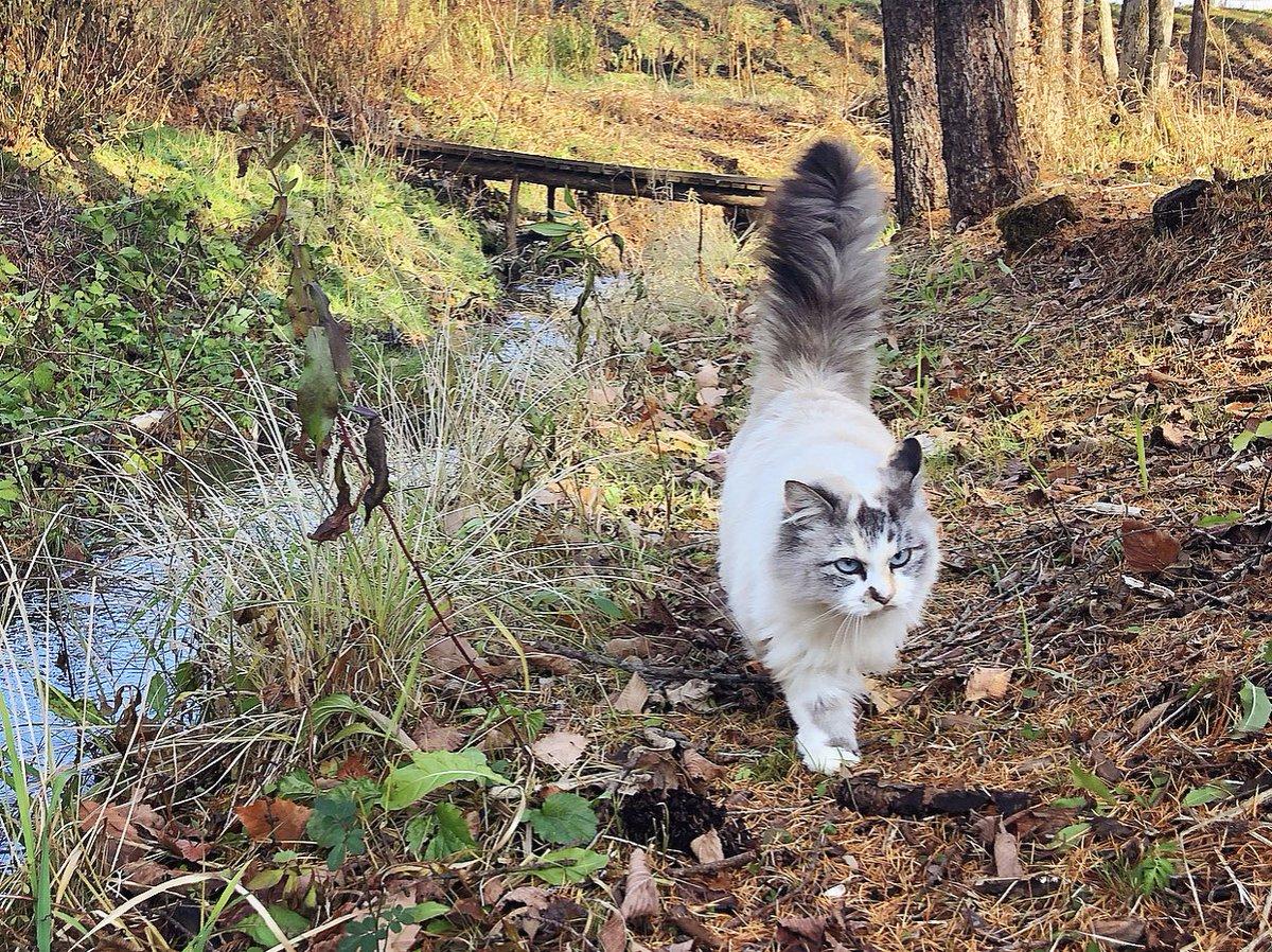 寒さに耐えて緑を残す植物たち。健気。陽が照っているうちにモフモフ、ボンボンとお散歩をしました。小川を流れていく落ち葉を観察。(当然のように私の膝の上に乗ってくるボンボン。ぽかぽか)