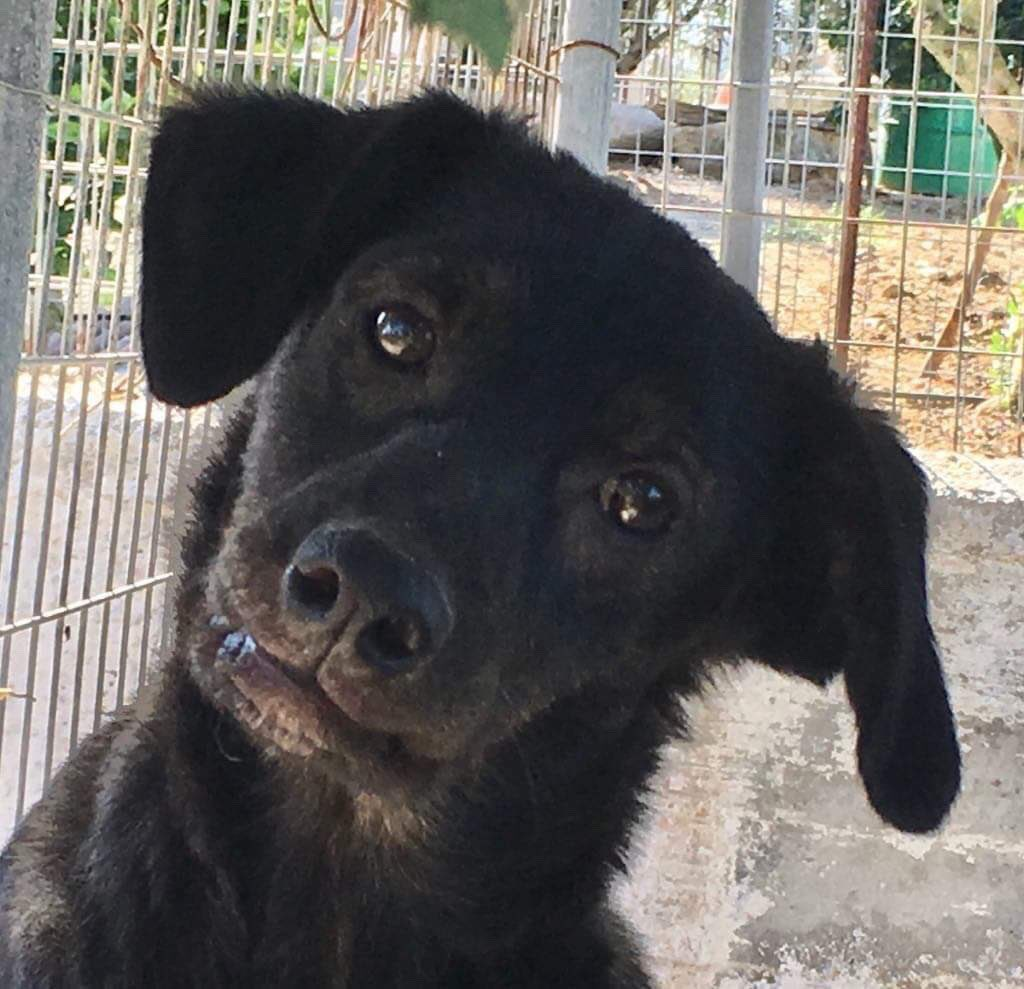 Found all alone, sad & having lost hope...love/care & foster dogs helped #adorable young Bodhi be happy again. He's a #grateful boy looking for a home where he's loved forever in #uk #Germany #NL  #AdoptDontShop #puppy #Dog #DogLover #dogsarefamily #blackisbeautful #cute<br>http://pic.twitter.com/T4KszTRo2x