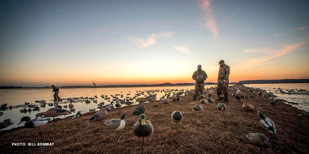 24 Tips for Today's Duck and Goose Hunters realtree.com/waterfowl-hunt… Some advice is timeless. #Realtree #waterfowl