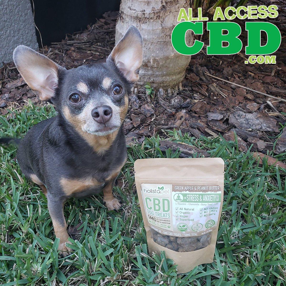 A happy dog is a dog with CBD. #clearwater  #cbd  #cannabis  #cbdoil  #hemp  #cannabiscommunity  #cbdlife  #hempoil  #tampa  #allaccess  #allaccesscbd  #cbdshop  #edibles  #cbdshop  #palmharbor  #lutz  #FullSpectrum  #Isolate
