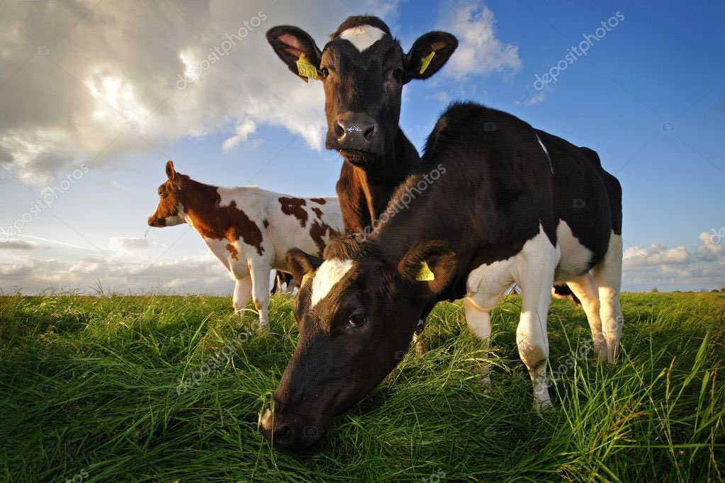 ÚLTIMO MINUTO: Fiscalía a cita a vacas del grupo Gloria por considerarlas parte de una organización criminal.