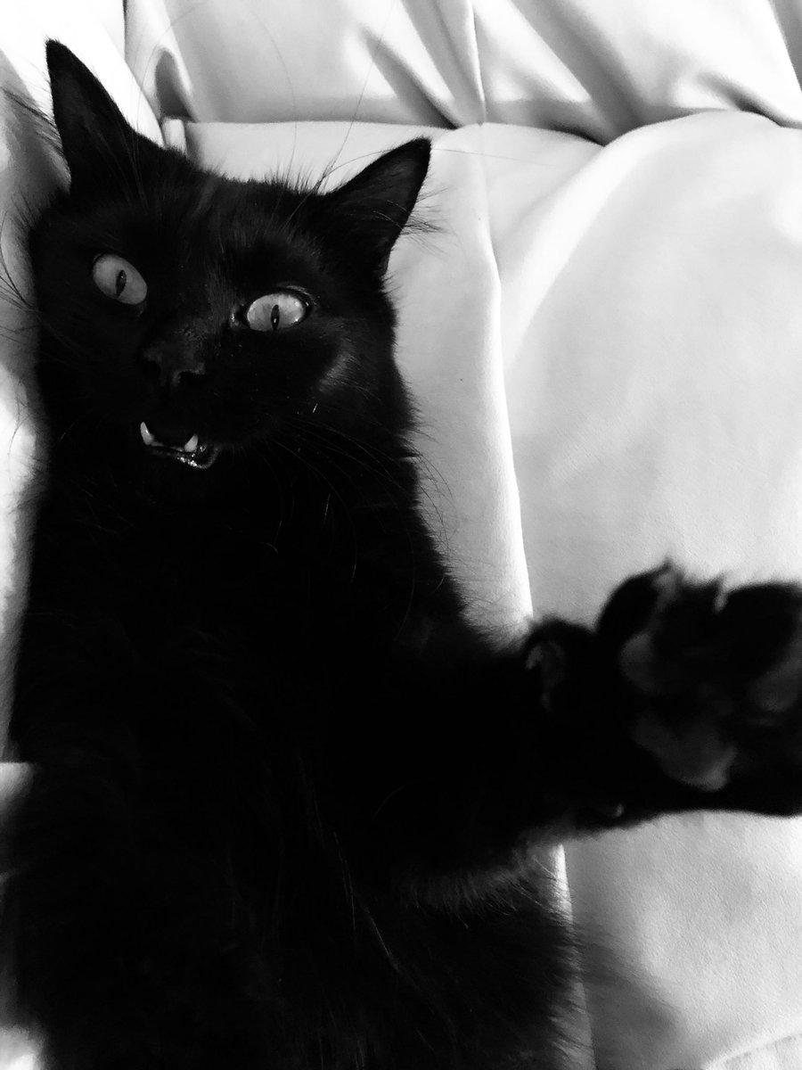 #gattinicontrosalvini