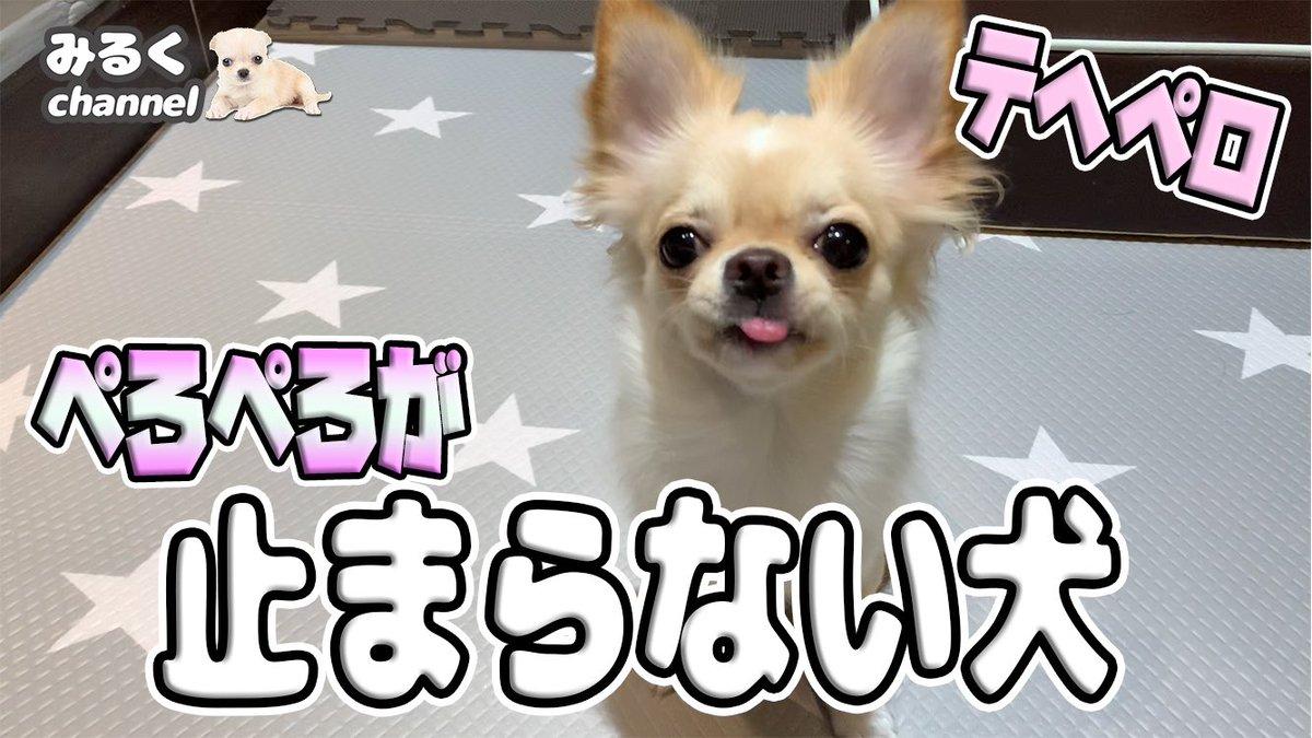 犬 ペロペロ 止まら ない