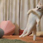 不思議な形?尻尾だけで立つ猫が発見される!