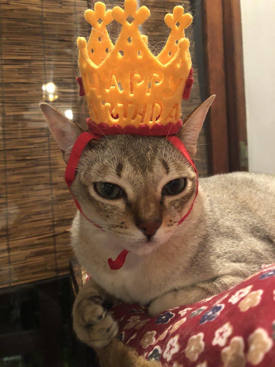 バースデーボーイはねむねむ。クーちゃんのお誕生日、ほんとにたくさんのお客様にお祝いしていただきありがとうございました!!ちゃあんと無事に1歳になりました。