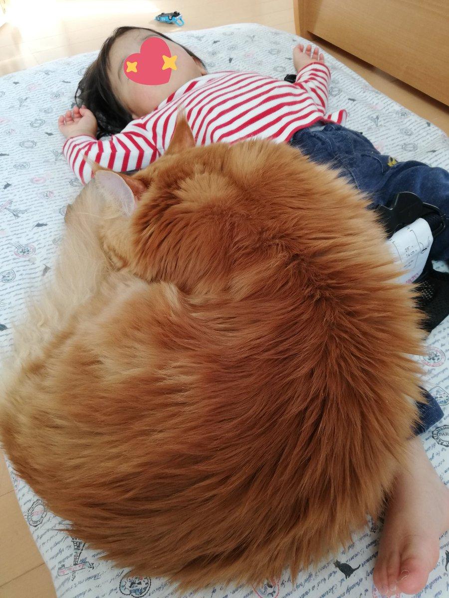 ママ友にこの写真見せたら、『あれ?こんな大きな犬も飼ってましたっけ?』って言われましたが、猫です。
