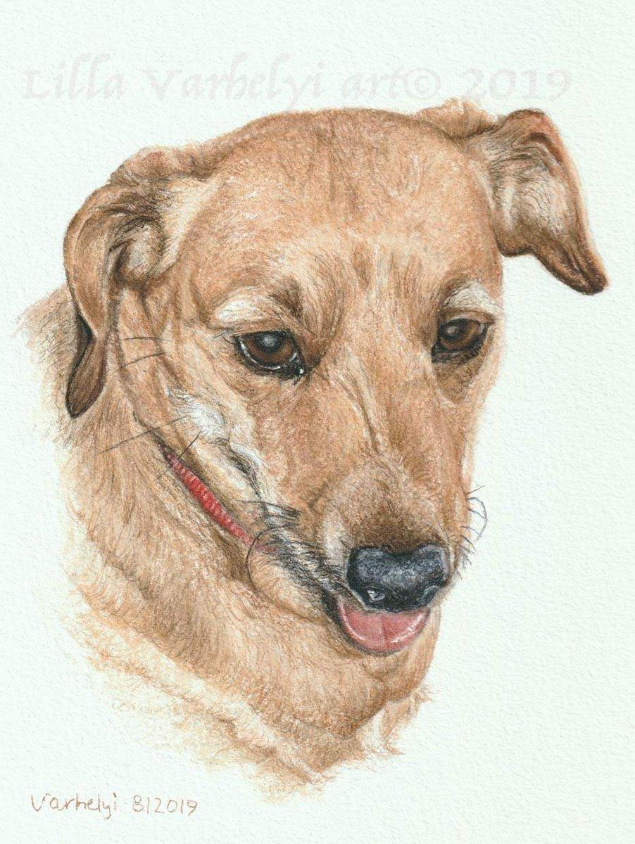 My newest commission inkdrawing: Hexe, ink on cardboard, 26x18 cm  #animaldrawing  #animalart #dogart #dogdrawing #petportrait #DogLover #petdrawing #dogartist #animalartist #commissionart #inkdrawing  #inkart #hundezeichnung #kleinehunde #hundeliebe #haustier #artforsalepic.twitter.com/t5Svb7Tyvk