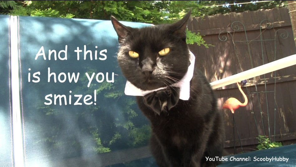 Trey in a scene from the CAT CLIPS episode IT'S A WONDERFUL WEDDING! on the ScoobyHubby channel. Watch the video: http://www.youtube.com/watch?v=pPy2aEMRnPQ… #wlf #Caturday #CatsOfTwitter #catsofinstagram #catlover #funny #lol #catoftheday #catclips #ThursdayThoughts