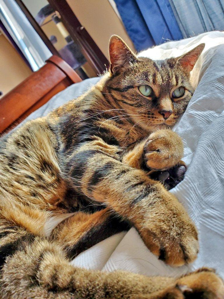 Is it #Caturday yet? - Roxy. #Pawsome #AdoptDontShop #CuteKittens #CatsOfInstagram #CatLady #Cats #FurBaby