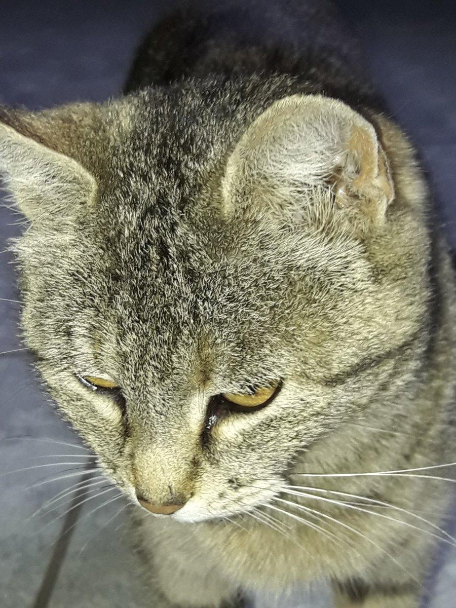 #cats #Caturday