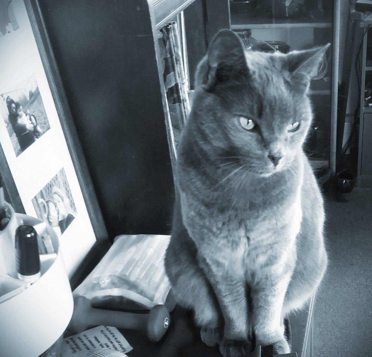 #CatsOfTwitter  #cats  #Caturday  #MissSadie🐱