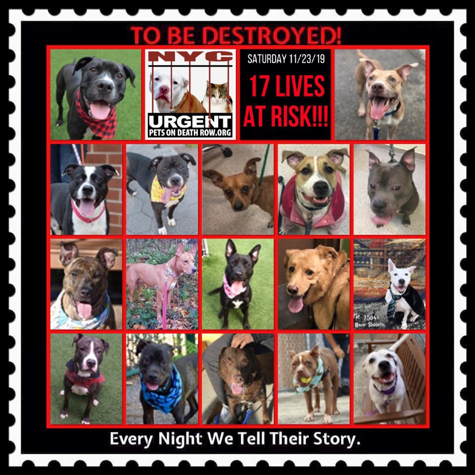 DOGS TO BE DESTROYED  11/23/19 -    Beginning Sunday, January 27, 2019, the ACC will be changing the At-Risk List from 18 hours to 42 hours. This means that they will have an At-Risk List three days a week instead of six days and that once placed at risk, the animals ...