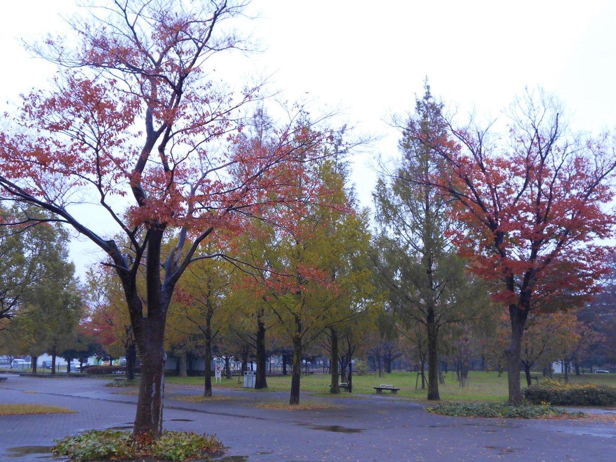 気温も1月並みで雨がしとしと…。寒さの厳しい1日ですね🍂園内も利用者の方も身体を丸くして往来しています。この寒さに伴って、公園の中の秋色は加速し始めるのでしょうか⁉風邪などひかないように温かくしてお越しください。