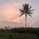 Evening walk behind my villa... no filter necessary