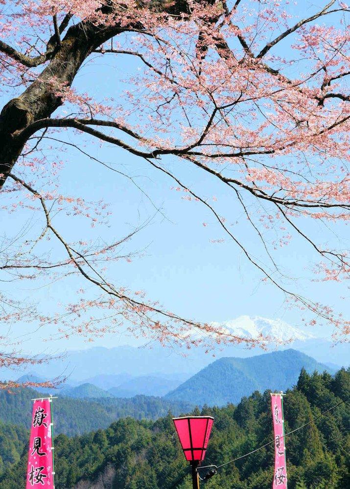 本日の一枚は、桜と御嶽山「嶽見桜」です。