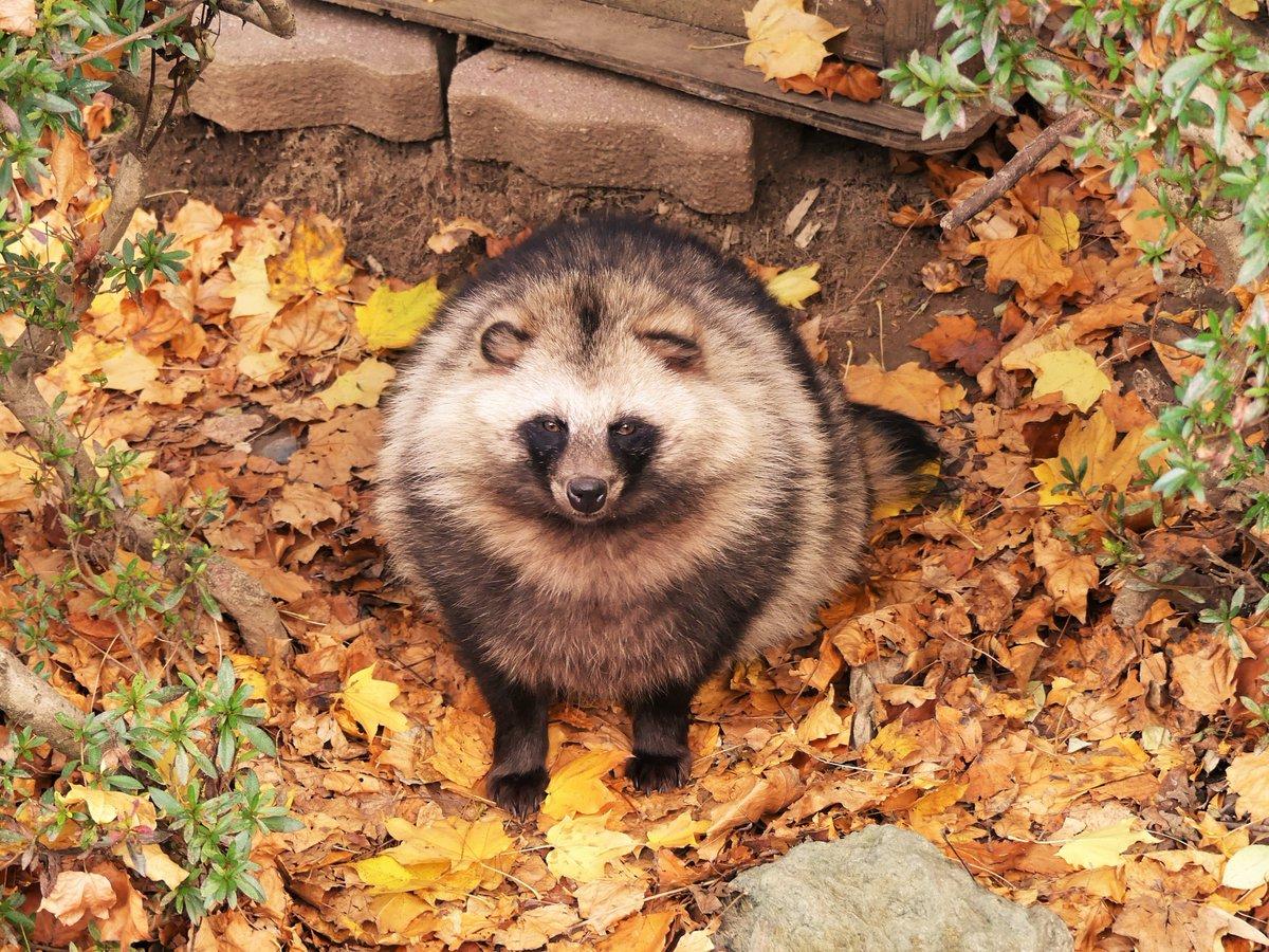 盛岡市動物公園さんの投稿画像
