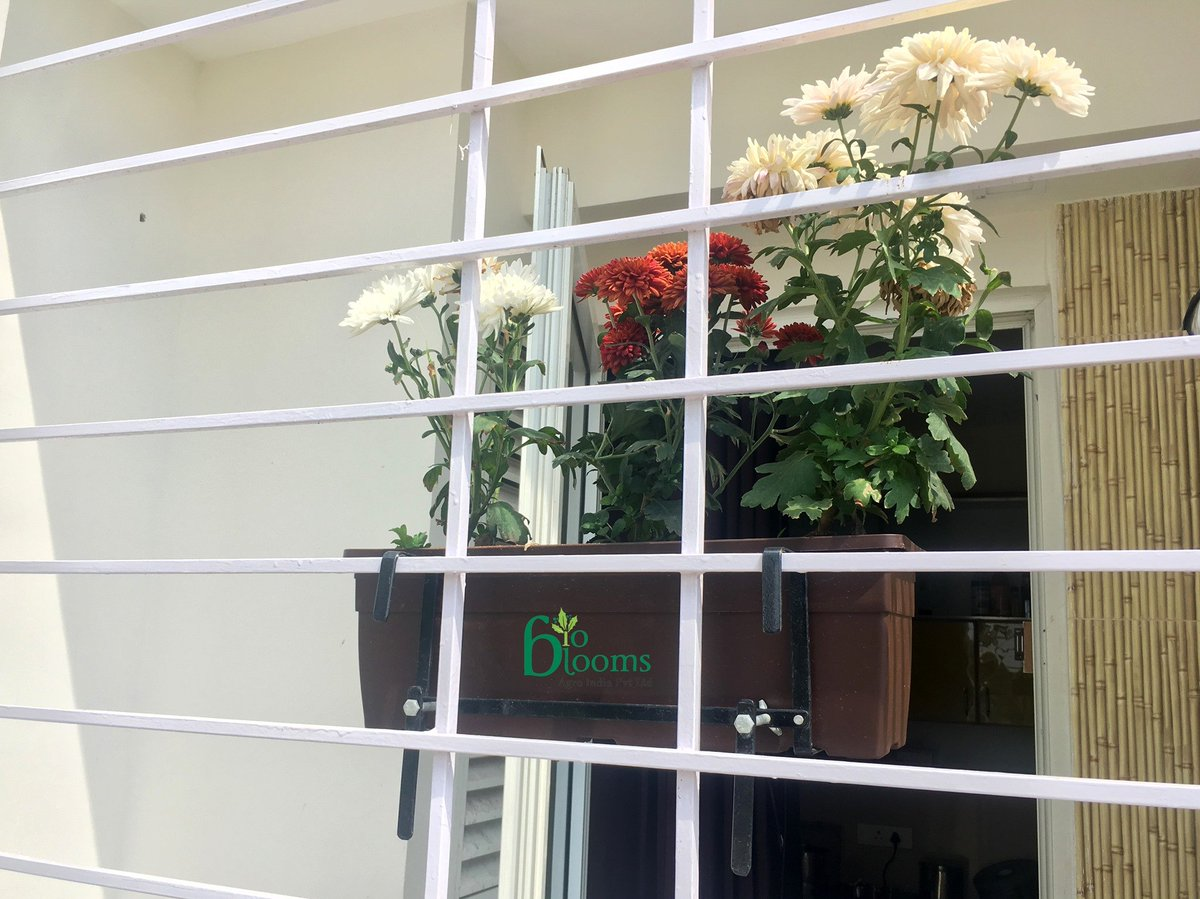 Bioblooms On Twitter Garden Window Bio Blooms Terrace Gardening