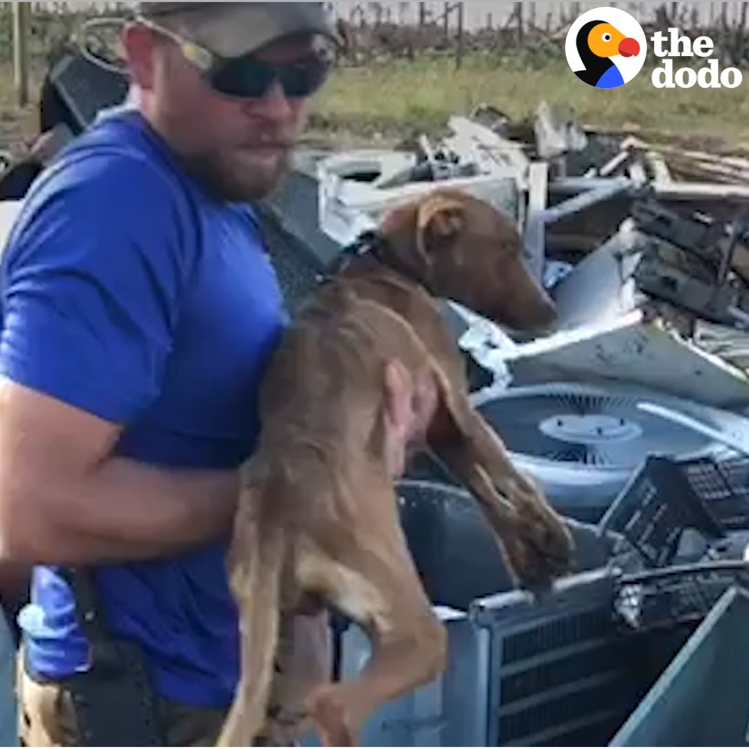 A drone found the sweetest dog left behind weeks after a hurricane!