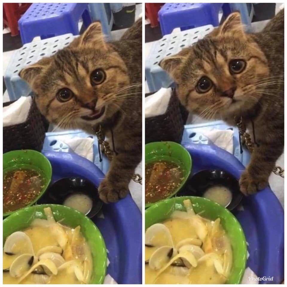 Can I have it? @MeowedOfficial  ...no?  📸 Trang Phạm   FB