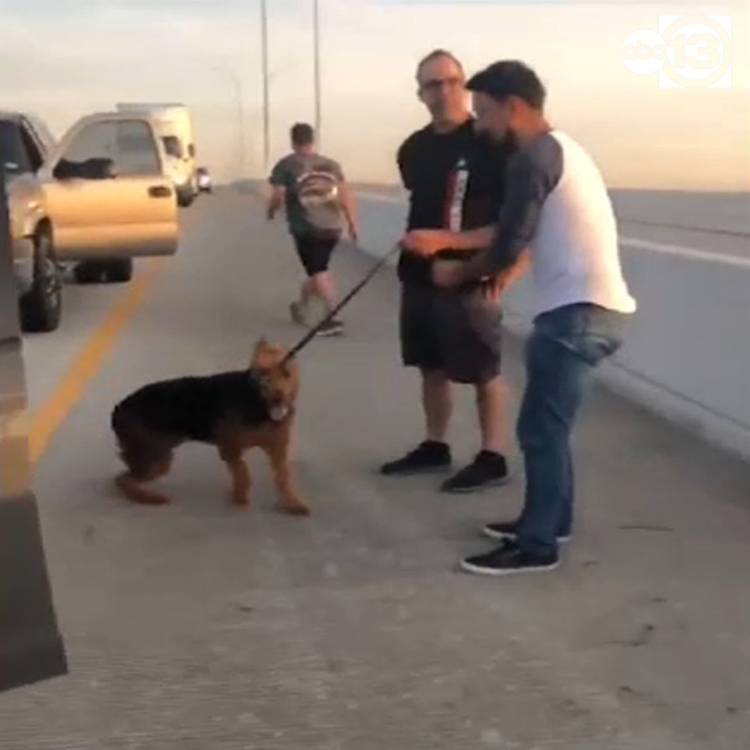 This is how we Houston! Good samaritans stop traffic to help dog running on the beltway! #LoveThisCity #Htown https://nam04.safelinks.protection.outlook.com/?url=https%3A%2F%2Fabc13.com%2Fdrivers-stop-traffic-to-rescue-dog-stranded-on-busy-beltway%2F5690079%2F%3Fex_cid%3DShareNow&data=02%7C01%7CCharly.Edsitty%40abc.com%7C3c2b16f7d48441d9fd2e08d766e211e5%7C56b731a8a2ac4c32bf6b616810e913c6%7C1%7C0%7C637090993494221979&sdata=kp%2B3pmi2tKizgaKiqDODeYcT13fLCmueDuQYicMCz%2F8%3D&reserved=0…pic.twitter.com/0Lq5mprSEF