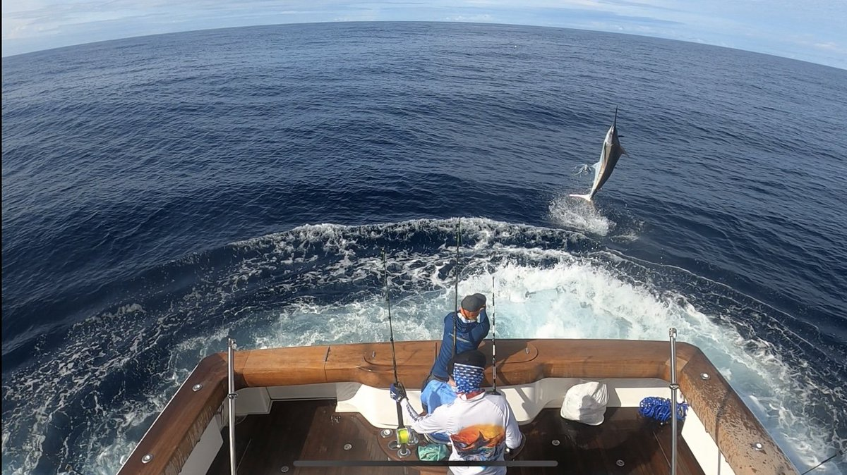 Piñas Bay, Panama - Capt. Zane Andrews on Finally went 7-11 on Blue Marlin and 2-2 on Sailfish over 3-Days.