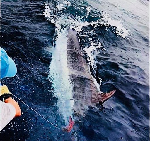 Ilhabella, Brazil - Camargue went 3-5 on Blue Marlin (600).