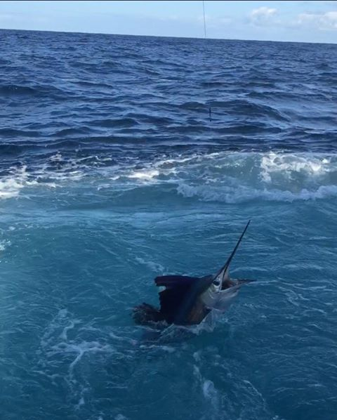 St. Augustine, FL - Freespool went 3-6 on Sailfish.