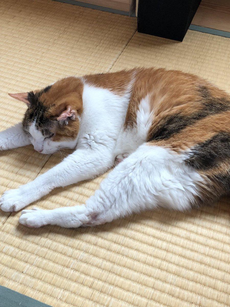 猫流して寝ようっと。