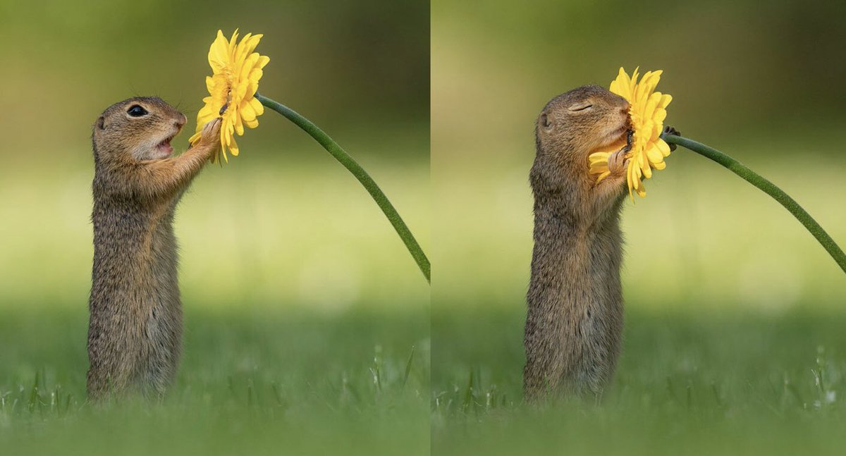 Dutch photographer Dick van Duijn captured the moment a squirrel took a moment out of its busy day to smell the flowers #TuesdayThoughts
