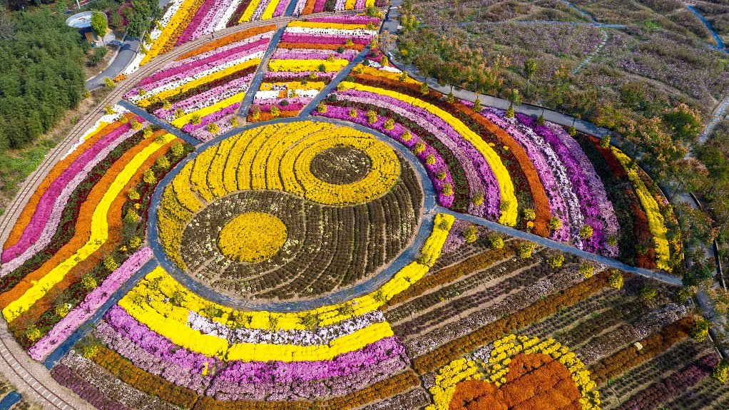 "A garden featuring 800 varieties of chrysanthemums in Jinhua City, east #China's Zhejiang Province, has become a mecca for domestic tourists for its unique designs like a flowerbed in the shape of a giant ""Bagua"" or ""Eight Diagrams"" https://bit.ly/2qHQoBd"