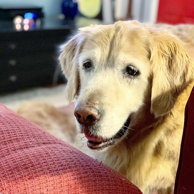 Replying to @TheGoldenRatio4: QUESO!!!!!