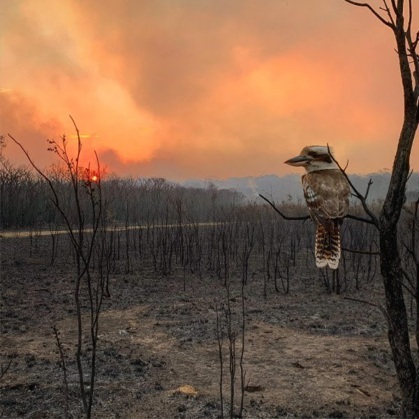 australia needs global support.   our wildlife is dying, people are losing their homes. our bushland is burnt to a crisp.   please give us the same coverage you gave the amazon and notre dame.   please help us. #AUSTRALIAFIRES